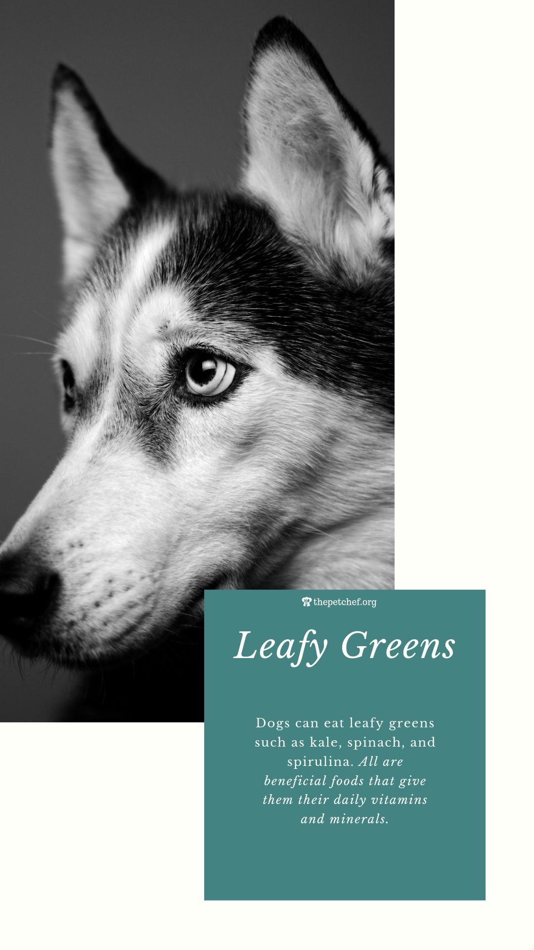 Want To Learn More About Leafy Greens Now You Can Check Out This