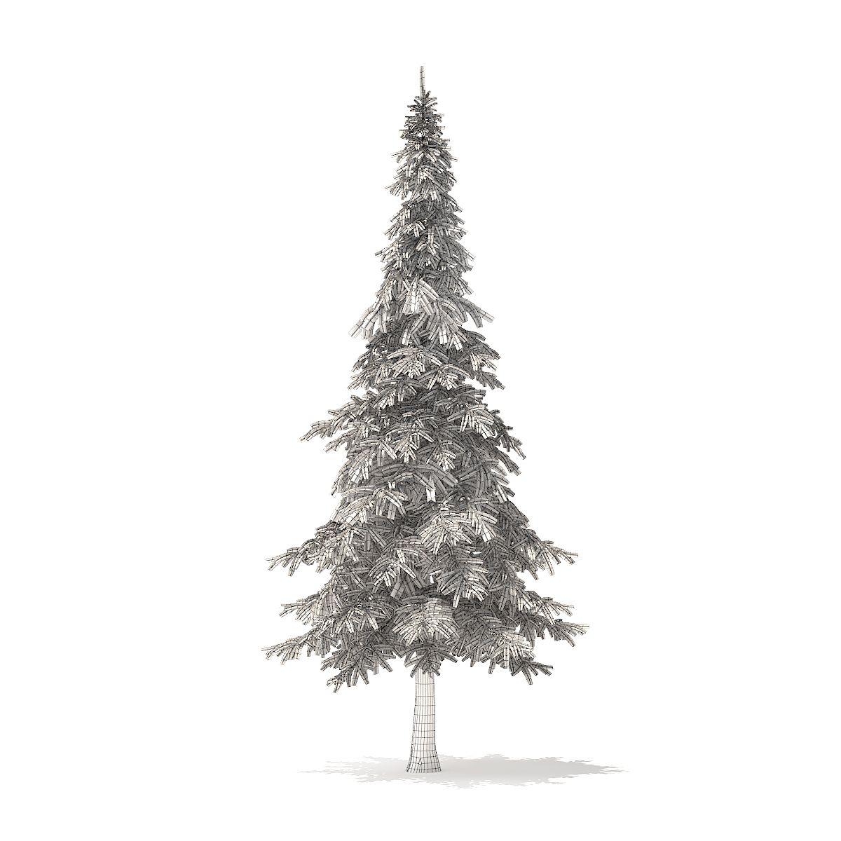 Fir Tree 3d Model 7m Fir Tree Tree 3d Model
