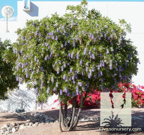 The Garden Center in San Antonio, TX - Plants Trees ...