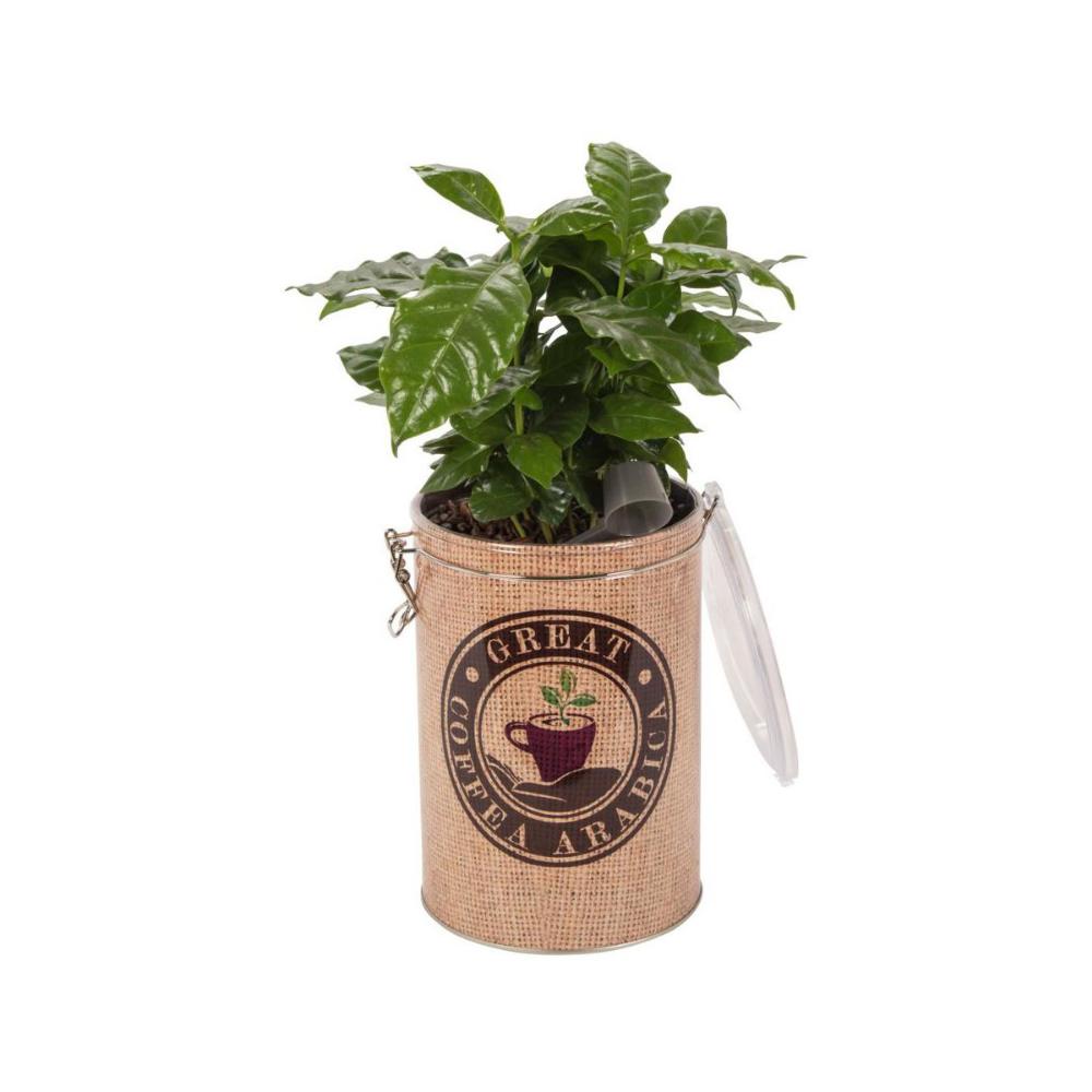 Kawa W Ozdobnej Puszce Mix 40 Cm Kwiaty Doniczkowe W Atrakcyjnej Cenie W Sklepach Leroy Merlin Mixing 40th