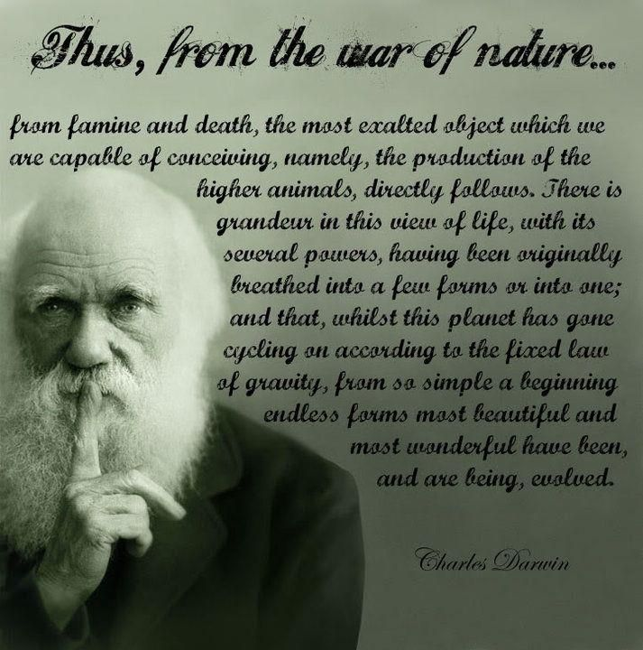 Darwin Quotes: Charles Darwin, And My Favorite Quotation From Origin Of