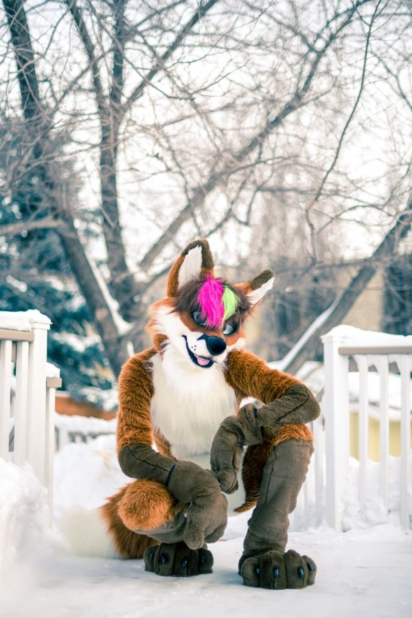 -21°C weather is no problem for furry foxes!