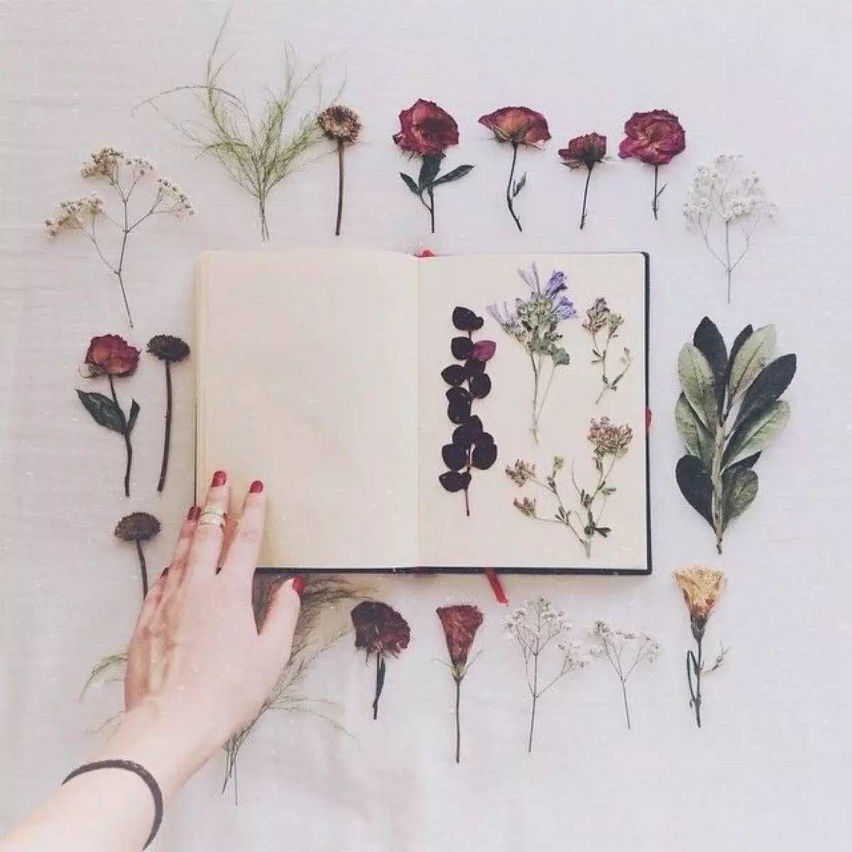 Как засушить листья и цветы для гербария и картин ...