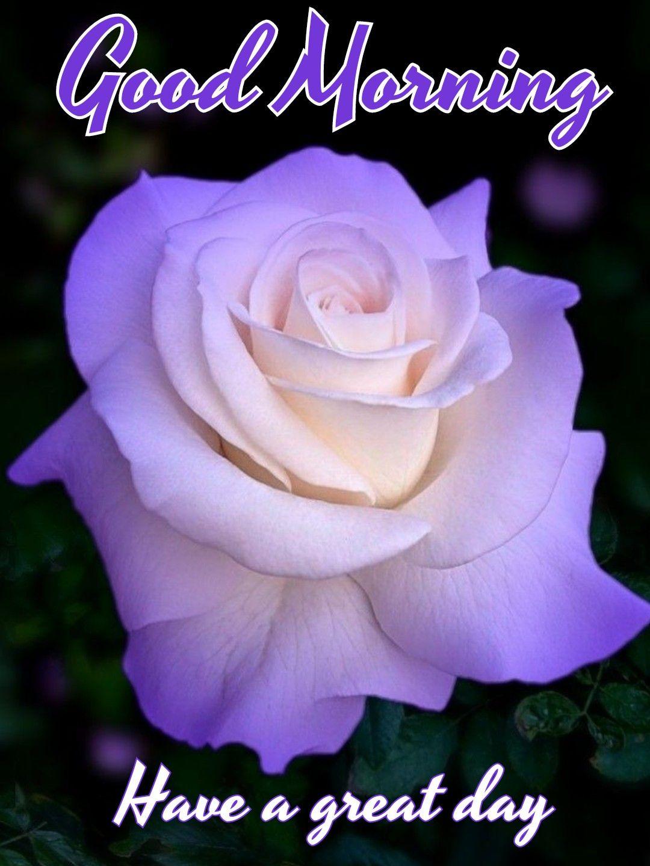 Pin By Ken Andaman On Good Morning Good Night Flowers Good Morning Saturday Good Morning Saturday Images