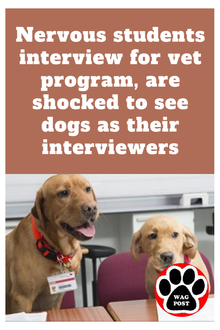 Nervous students interview for vet program, are shocked to