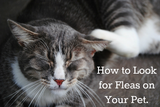 4 Benefits of Wet Cat Food To Keep Your Cat Healthy Cat