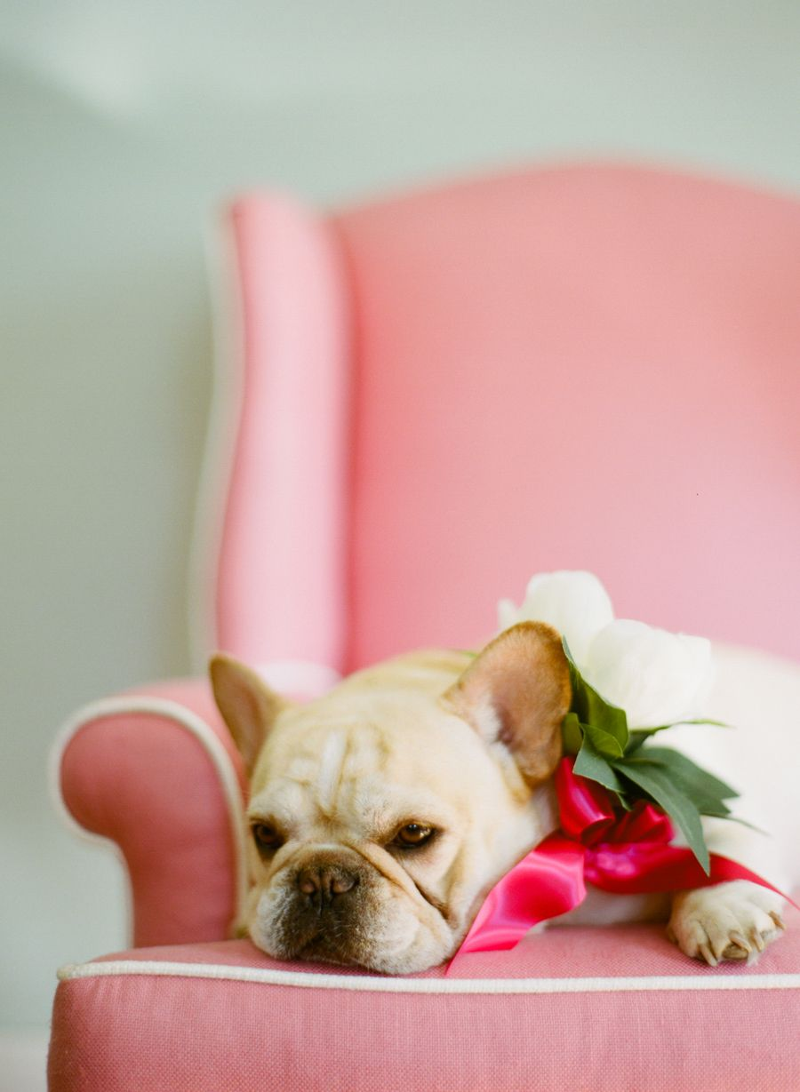 Good Ribbon Bow Adorable Dog - 30173bfc394646dffba2ad60f29d584b  Graphic_216745  .jpg