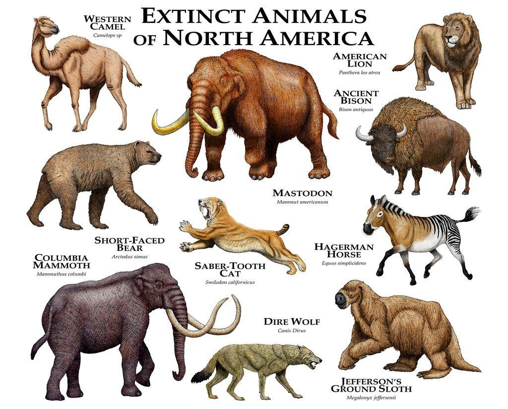 Extinct Animals of North America Extinct animals