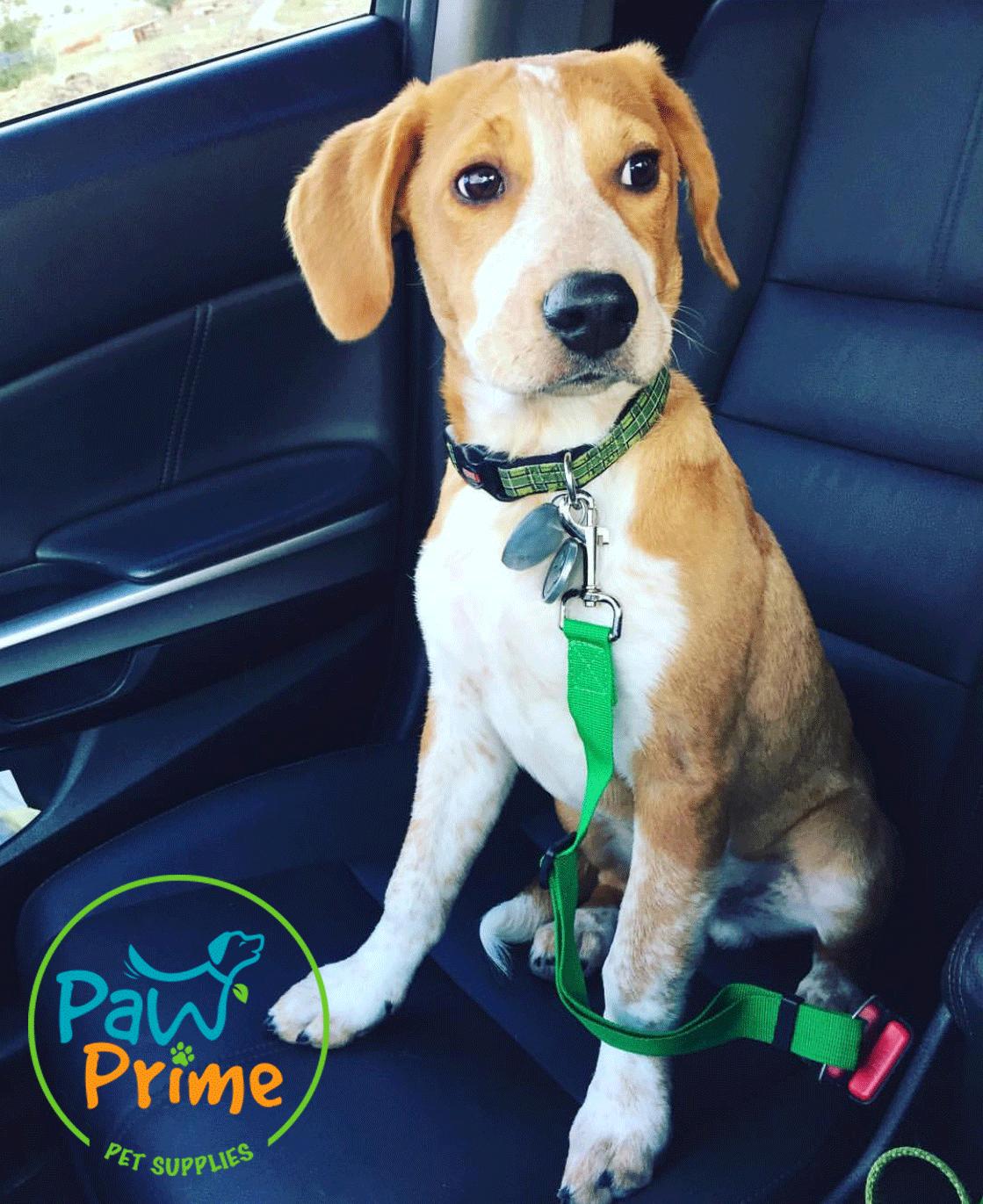 Paw Prime's Doggy Seatbelt's Dog stroller, Dog bike