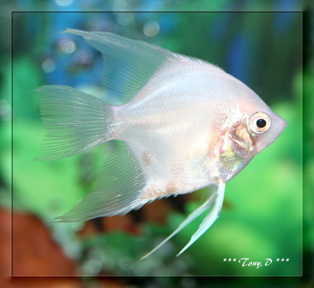 Lower Ammonia Levels in a Fish Tank if They Are Not Very ...