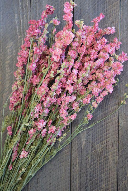 Dried Pink Larkspur Flowers | Tattoos | Pinterest | Larkspur flower