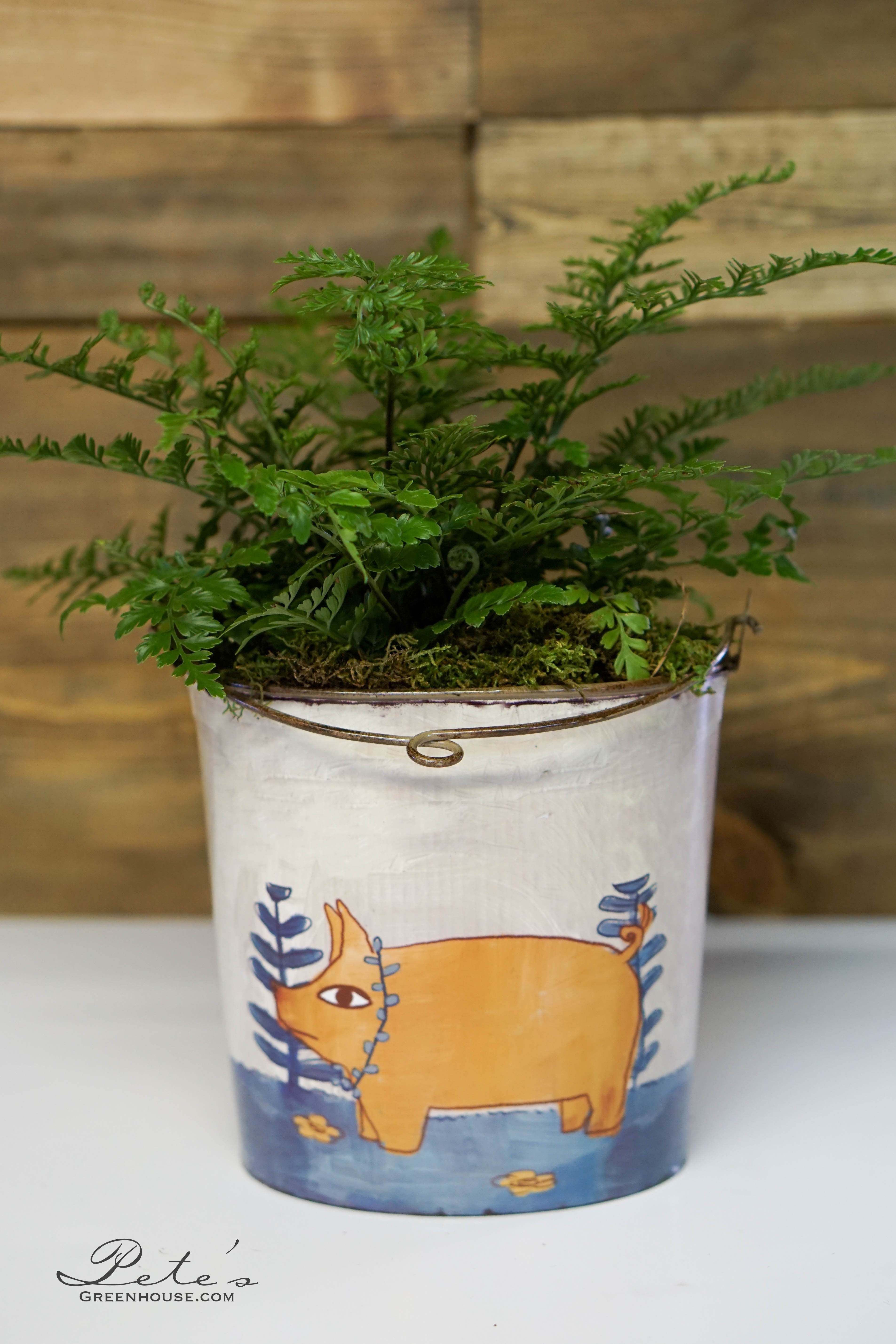 This cutie pie pig planter is paired perfectly with a vibrant fern! | $28.99