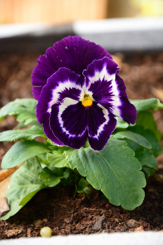 Idées pour fleurir son jardin à l\'automne | FLEURS | Pinterest