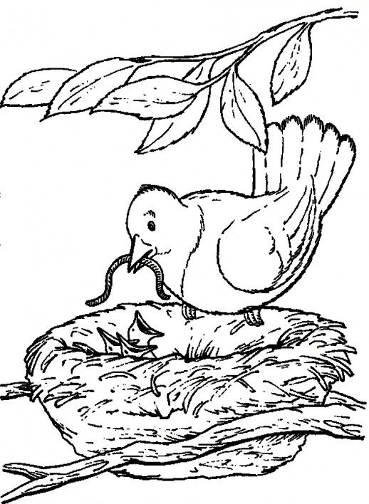 A Mother Bird Feeding Her Little Kids With Caterpillar Coloring Pages