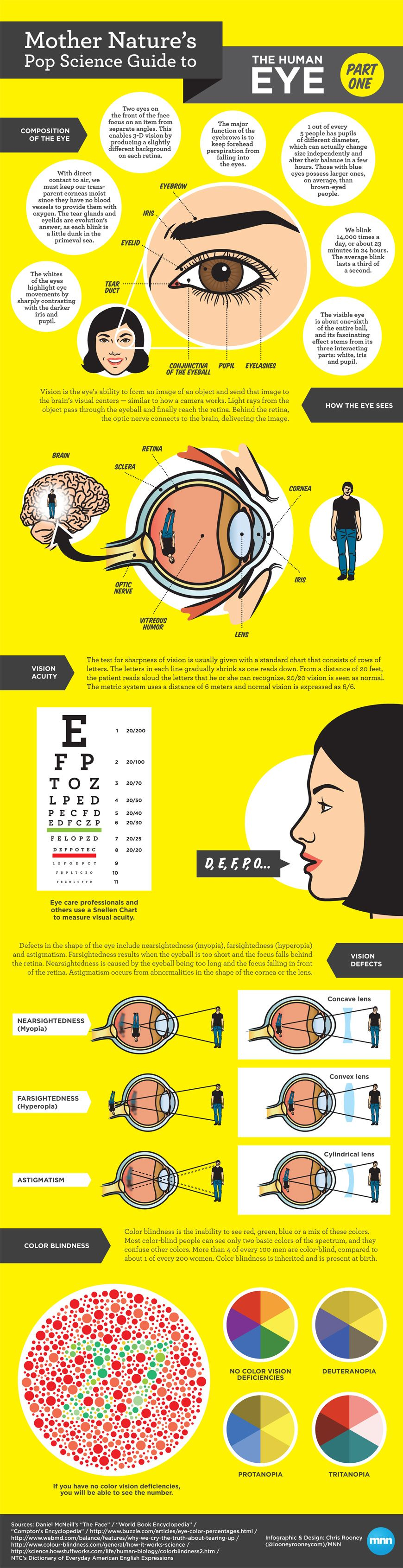Anatomy Of The Human Eye Manual Guide