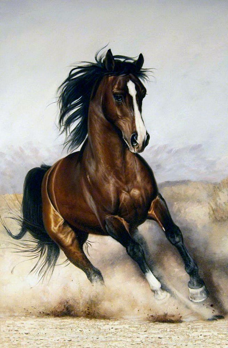 Рисунки красивых лошадей картинки