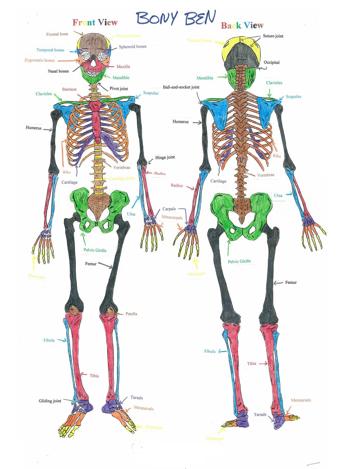 Colorful Skeleton Diagram House Wiring Diagram Symbols