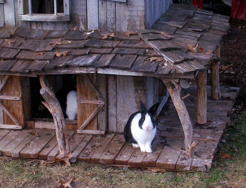 Housing Tips Information Diy And Links For Rabbits