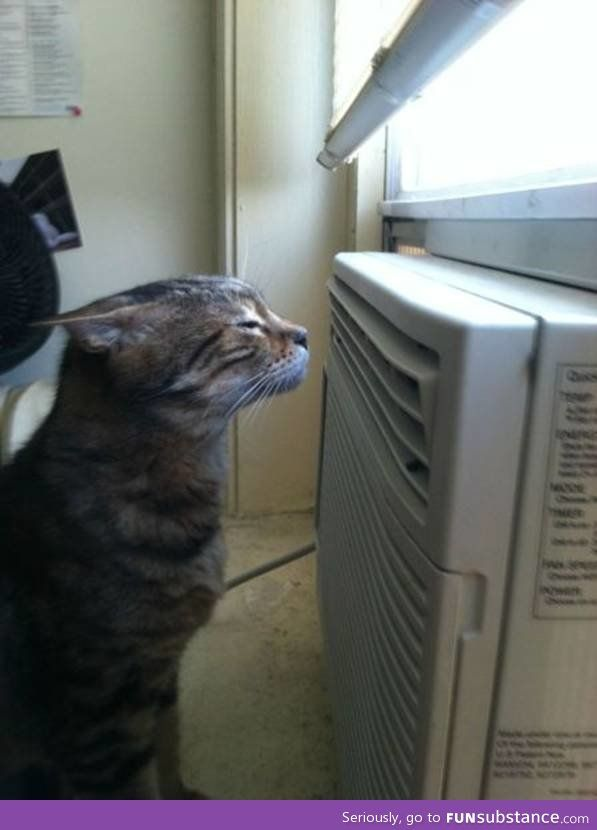 You Know It S Hot When This Is Where You Find Your Cat Funsubstance Cat Problems Cats Cats And Kittens