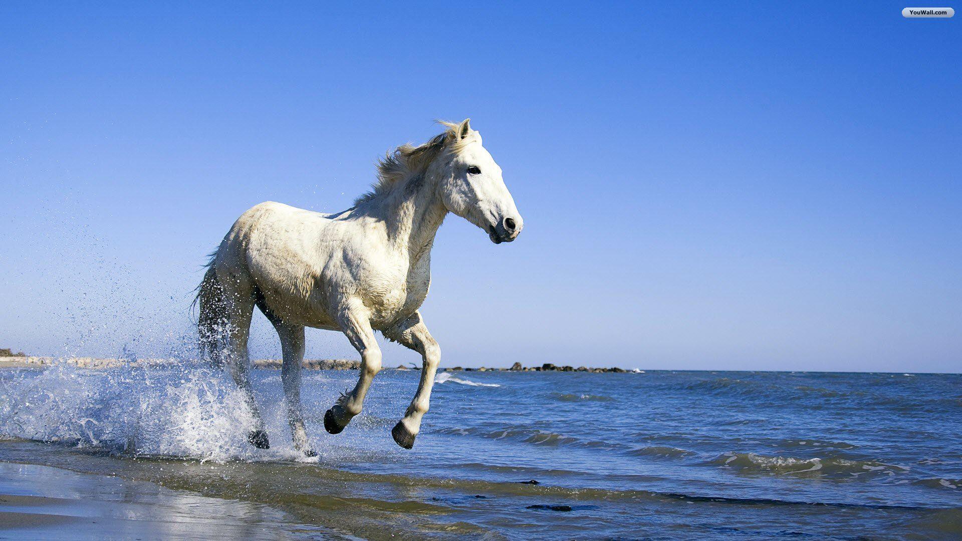 Beautiful Wallpaper Horse Desktop Background - 301a0a29f59cfc2c3e0dece7286397a0  You Should Have_485685.jpg