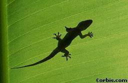 Pin By Candace Thompson On Geckos Small Lizards Lizard Gecko