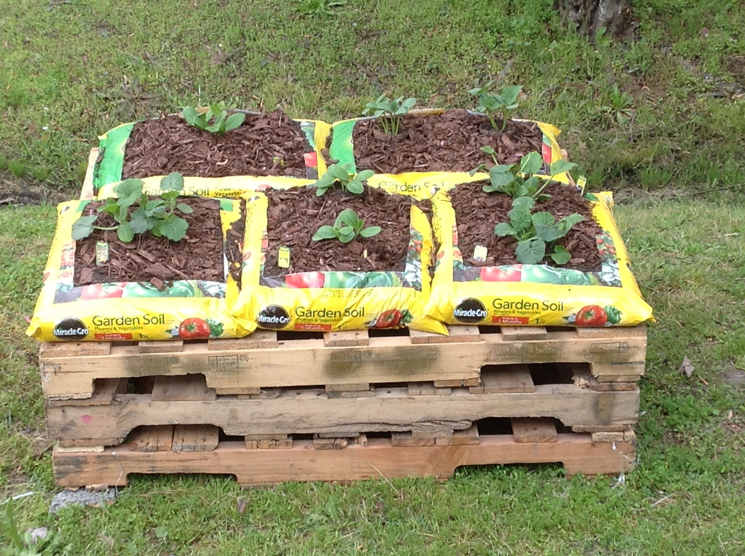 My weekend project 3 pallets 5 bags miracle grow potting for Garden soil bags