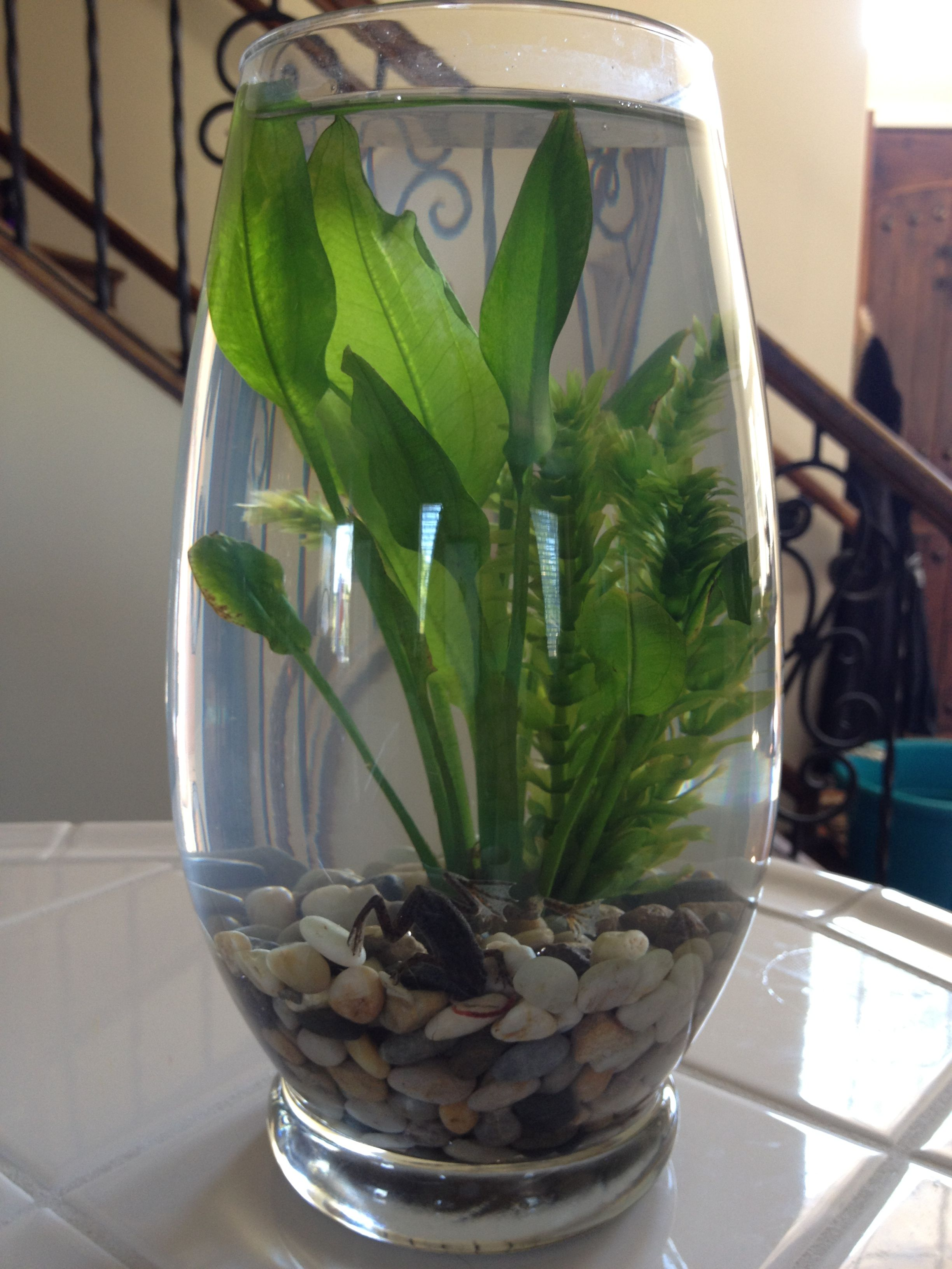 African Dwarf Frogs Terrarium So Easy To Make And The