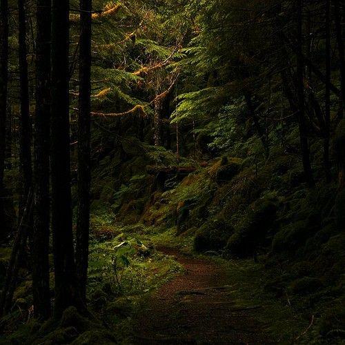 Bosque pt2
