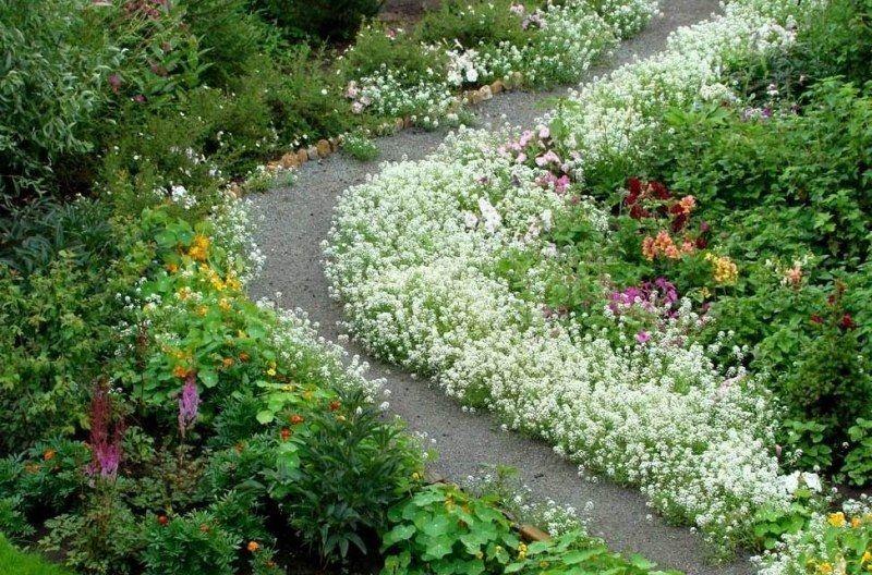 Цветы вдоль тропинки 94