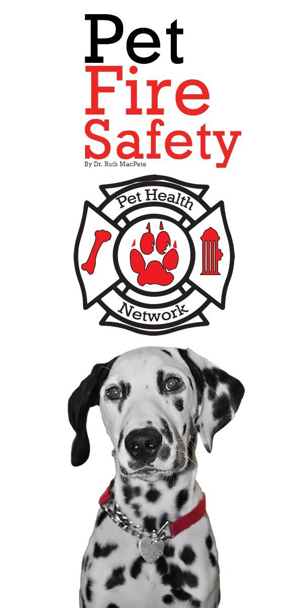 Today is National Pet Fire Safety Day. Some tips by Dr
