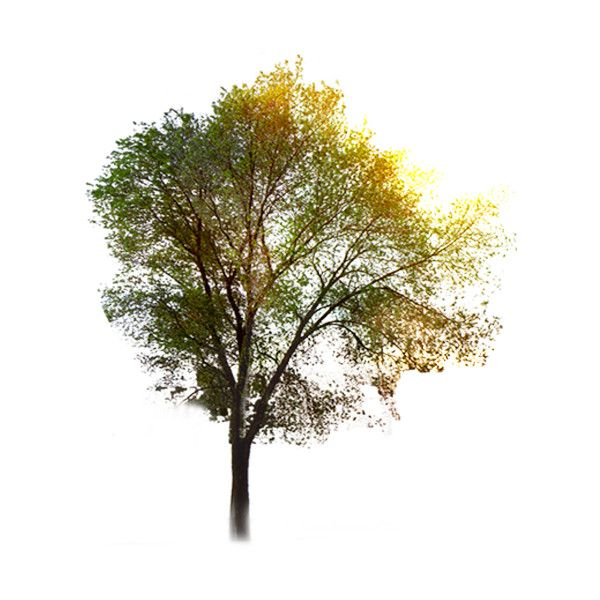 tree ❤ liked on Polyvore featuring trees, flowers, nature, plants, backgrounds and fillers