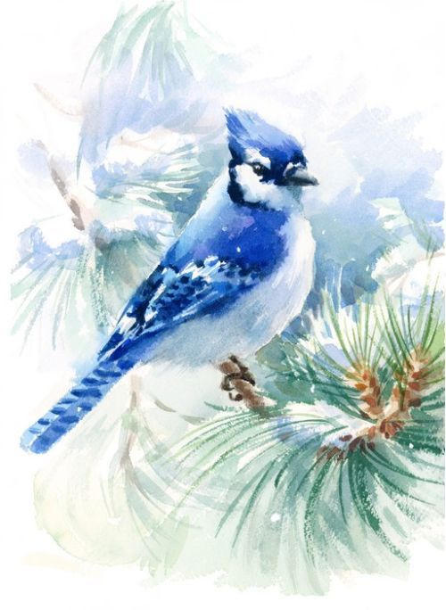 Blue Jay Snowfall Stretched Canvas 7680 Birds Painting