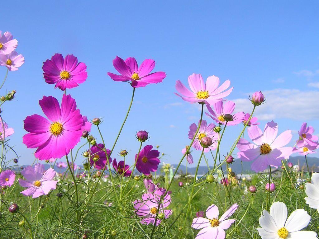 Pin On My Favorite Flowers