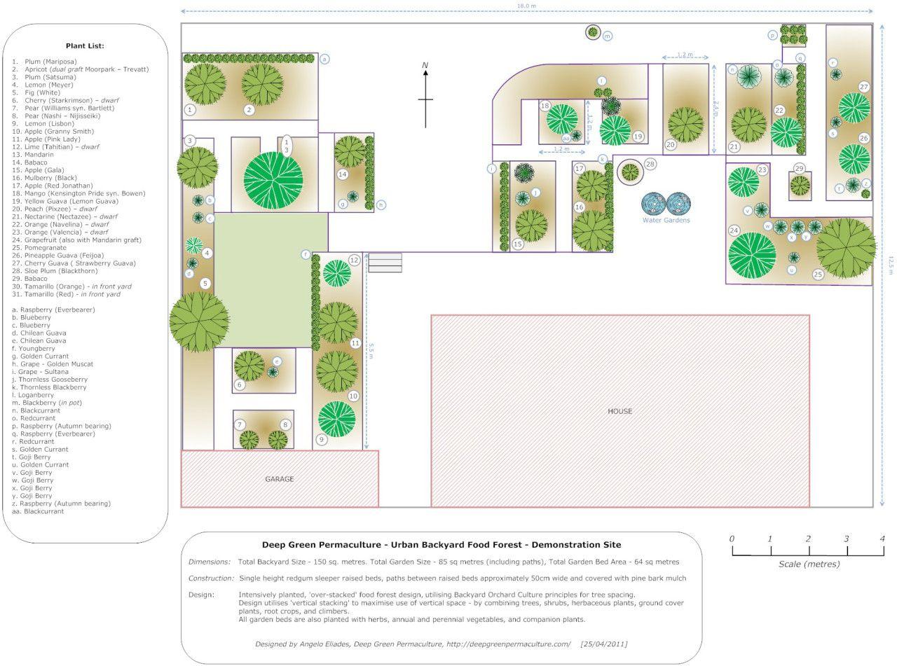 Garden bed with trees  updated garden design   Melbourne suburban food forest  Garden