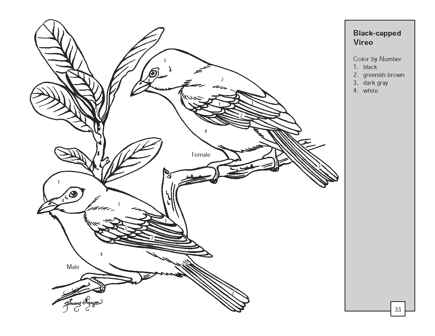 Realistic Bird Coloring Pages | texas vireo bird color by ...