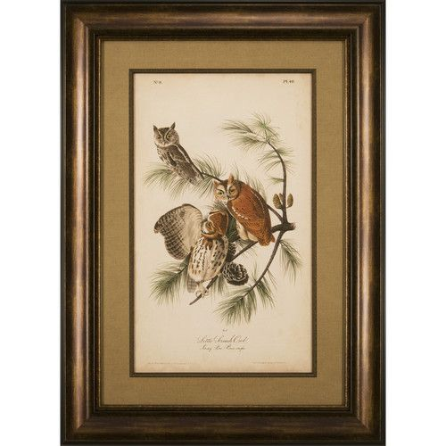 Ashton Wall Décor LLC Audubon Screech Owl Framed Graphic Art ...