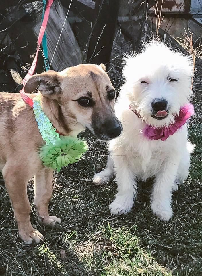 Adopt Cagney And Lacey On Petfinder Cagney And Lacey Mixed Breed Adoption