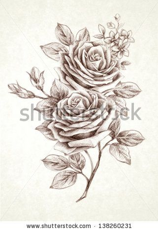 Sketch a rose bouquet in simple background by tang, via ...
