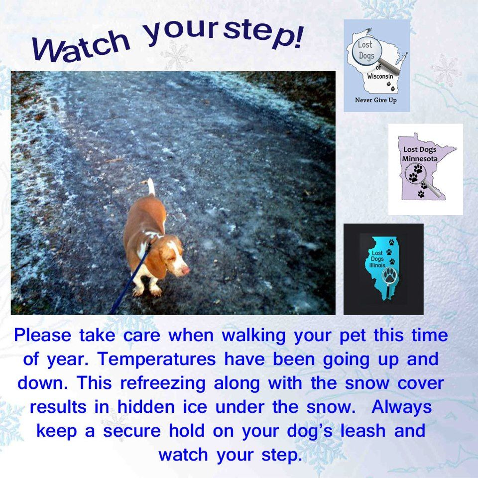 Watch Your Step Tips For Walking Dogs In Winter Http Www