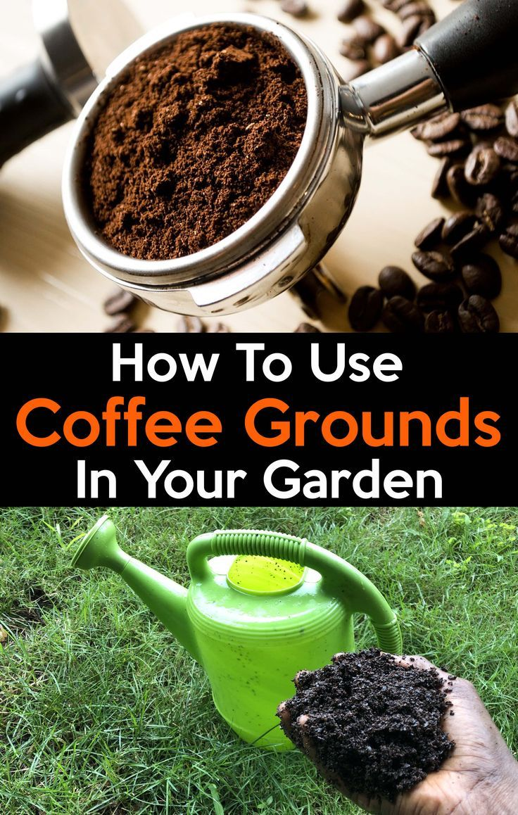 uses of coffee grounds in the garden Coffee grounds for
