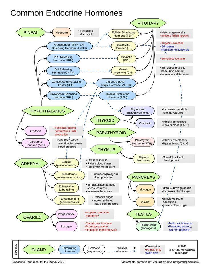 common endocrine hormones Healthcare Infographics Pinterest
