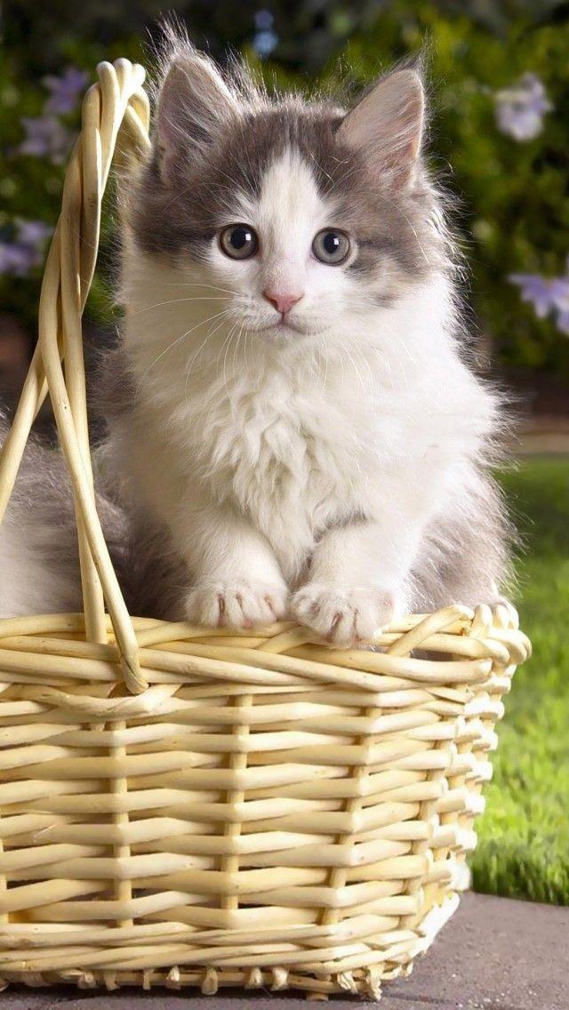 kittens, steam basket, flowers, grass, three Wallpaper