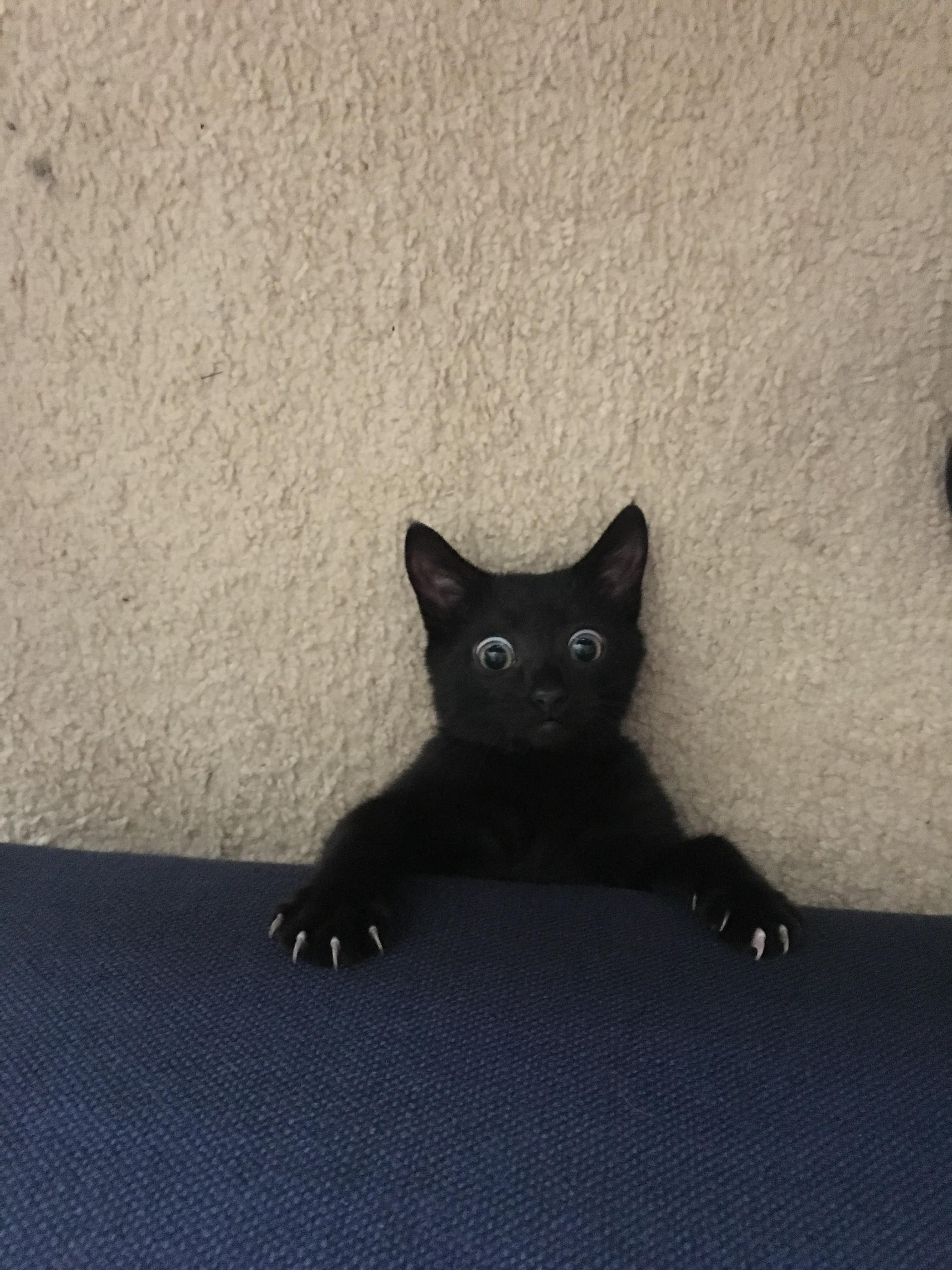 I Heard A Noise Coming From Under The Couch And This Is What I Saw When I Looked Down Hello There Bright Cat Having Kittens Cute Black Cats Beautiful Cats