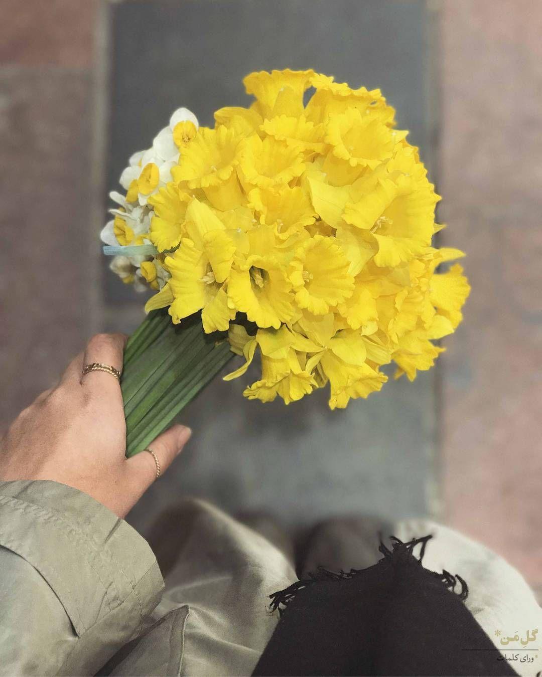 گل من این روزها به آرامی دوستت دارم جوری کنار تو می آیم مبادا که ناز خواب شیرینت بیاشوبد کابوس شود و بترسد طوری سلام می کنم مبادا Flowers Daffodils Plants