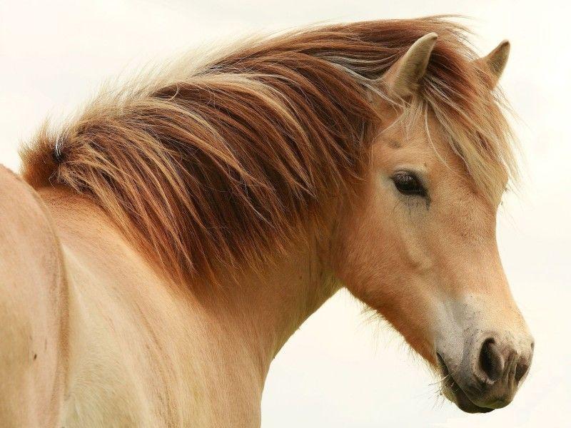 Les Fonds D Ecran La Tete D Un Poney Beaux Chevaux Image Cheval Animales