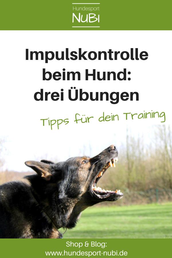 Photo of 3 Übungen zur Impulskontrolle – wie dein Hund lernt, nicht auszuflippen