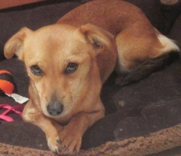 Pin Von M Hari Auf Pet Projects Angstlicher Hund Alter Hund Hunde