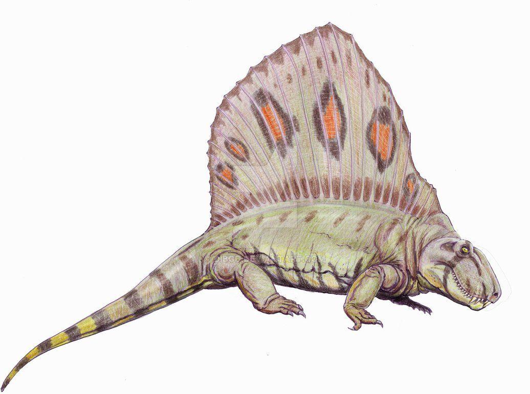 Dimetrodon Grandis By Dibgd