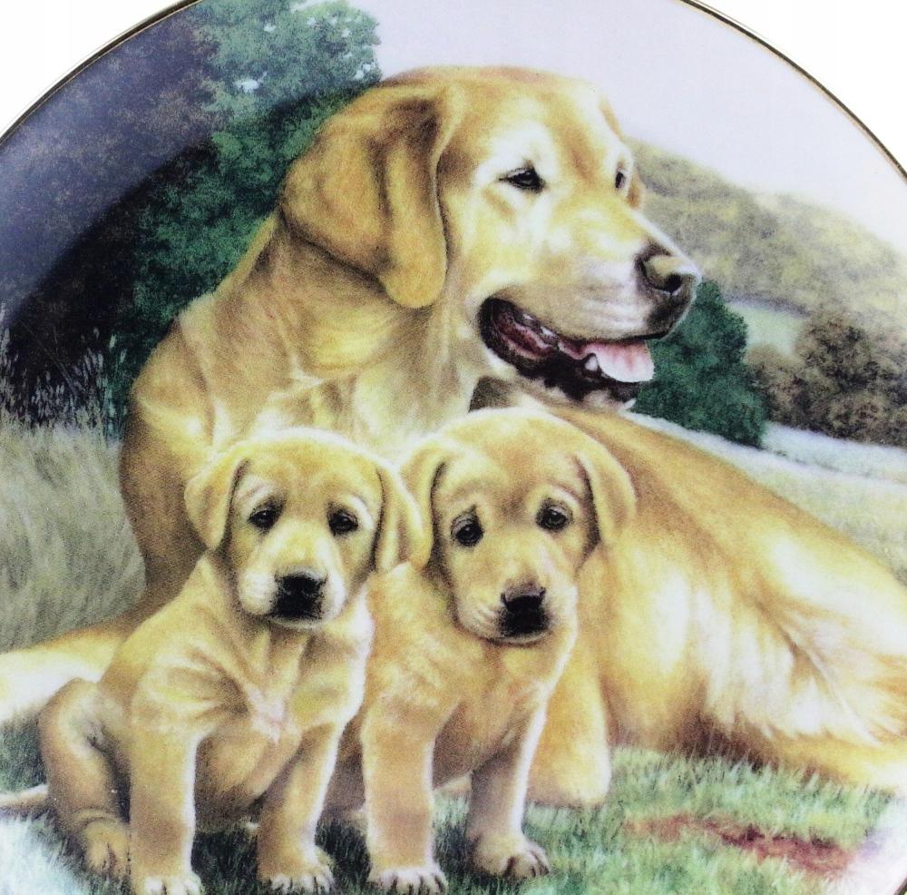 Pchli Targ Talerz Labradory 7782934191 Oficjalne Archiwum Allegro Golden Retriever Retriever Dogs
