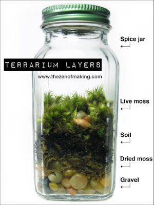 Terrariums in old spice jars. I wonder if baby food jars could work as well.
